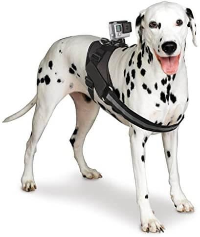 Bower Dog Harness Mount