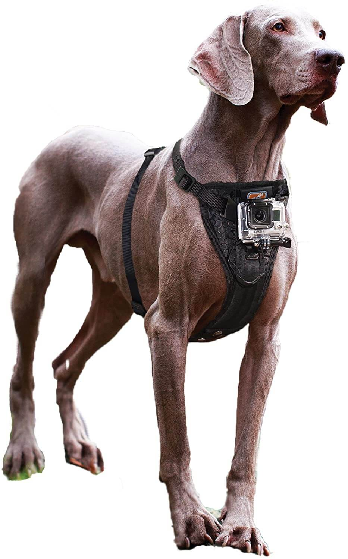 Kurgo Dog Harness with Camera Mount