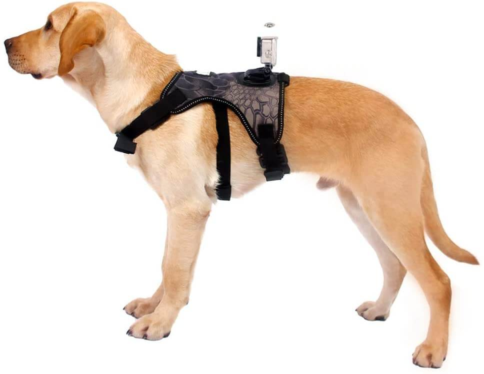 TEHAUX Sports Camera Dog Fetch Harness
